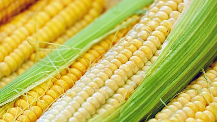 Польша желает лишить Украину преференций для поставок в ЕС кукурузы