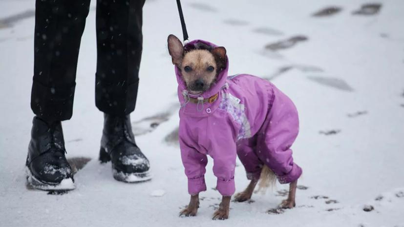 Минприроды подготовило рекомендации по закону об обращении с животными