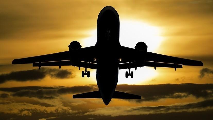 Минтранс изучит ситуацию с нормами провоза животных в самолёте