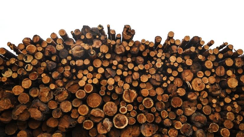 В Сибири пресекли крупную контрабанду лесоматериалов за рубеж