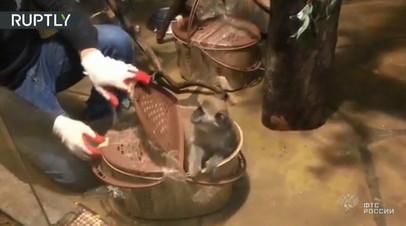 Таможенники пресекли контрабанду мартышек с Украины
