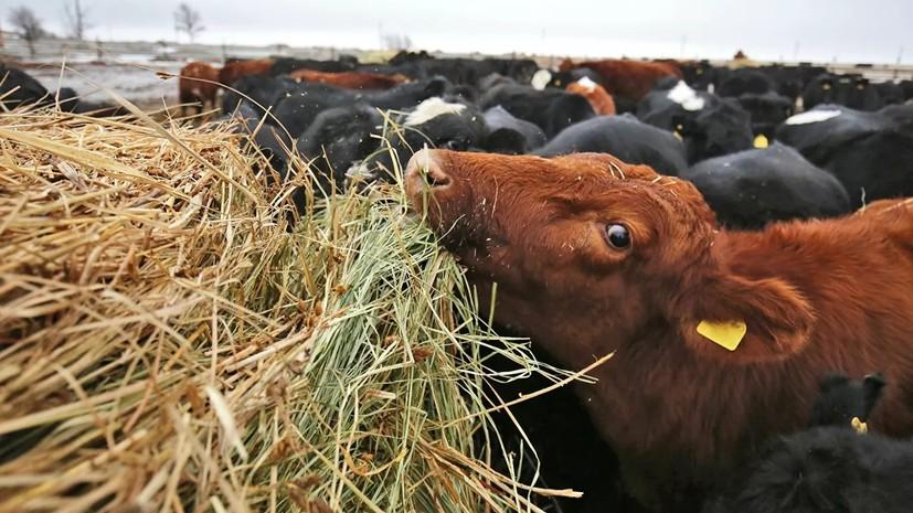 В Татарстане заявили о росте фермерского производства в 2019 году