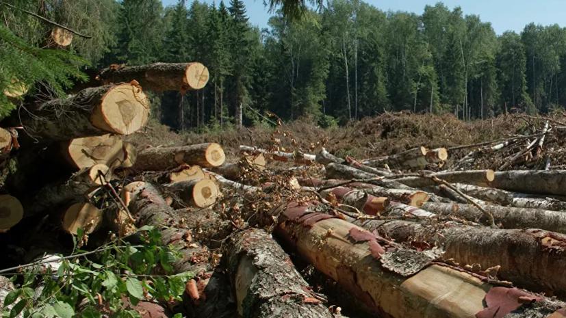 В Симферополе возбудили дело из-за незаконной вырубки деревьев