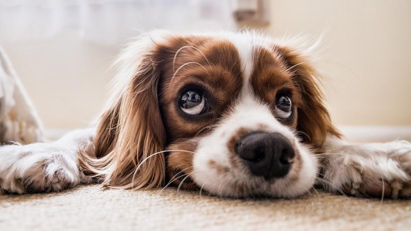 Эксперт напомнил об опасности праздников для собак