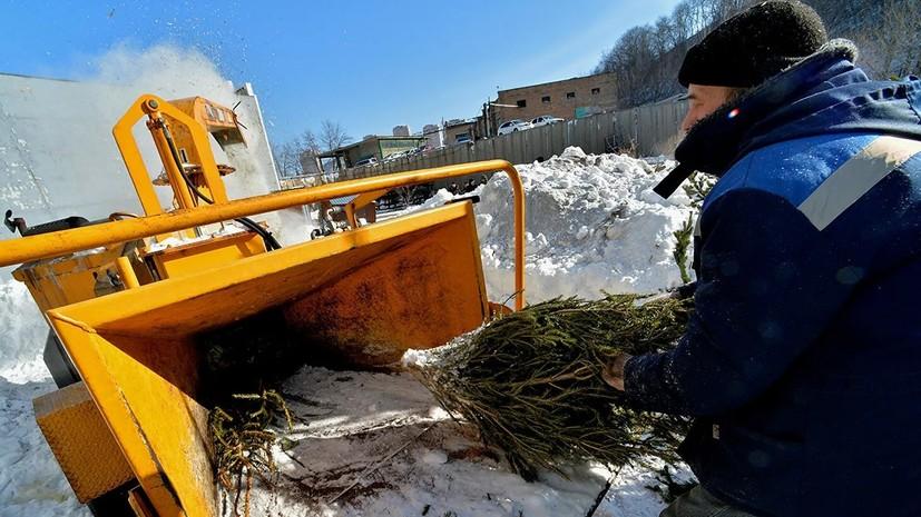 Экологическая акция «Подари своей ёлке вторую жизнь» начнётся 15 января в Подмосковье