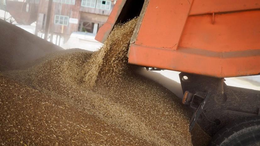 Урожай зерна в России за 2019 год составил 120,6 млн тонн