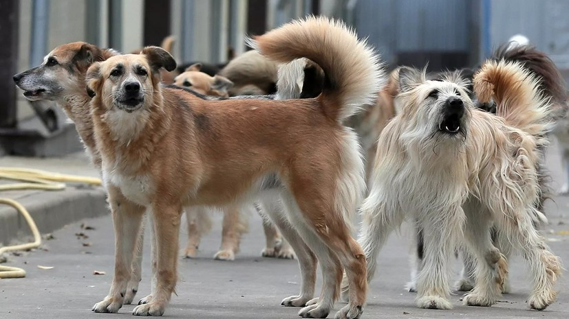 В Подмосковье рассказали о планах работы с безнадзорными животными