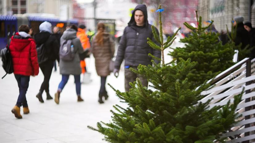 Лесничества Ленобласти заявили о готовности бесплатно выдавать ёлки к Новому году