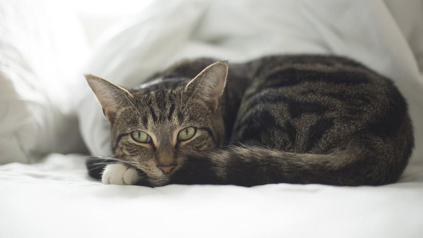 В Госдуме поддержали бесплатную регистрацию домашних животных
