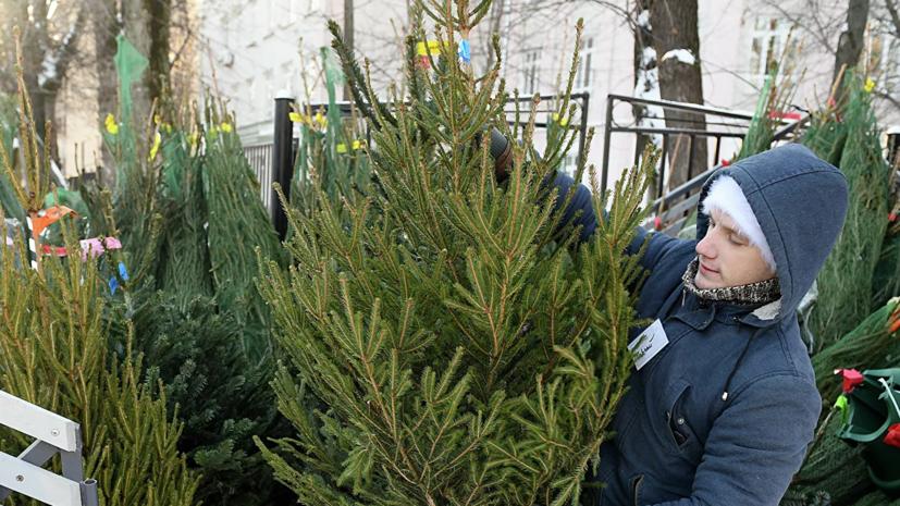 В Москве рассказали о низком спросе на живые ёлки