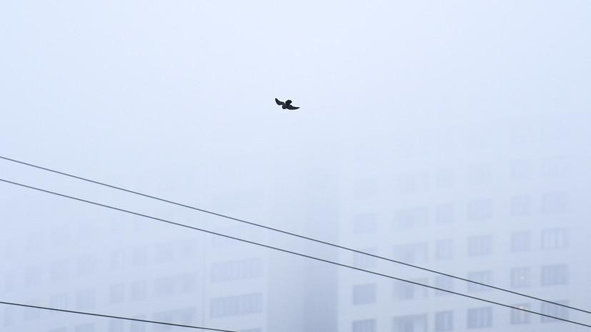Спасатели предупредили о тумане в Петербурге
