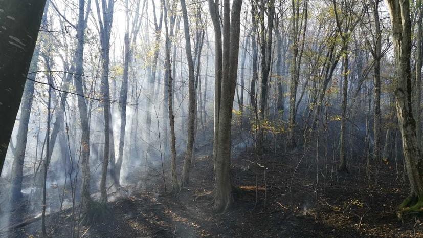 В Сочинском нацпарке локализовали лесной пожар