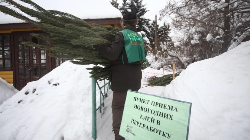 Акция «Ёлочный круговорот» начнётся 5 января в Москве
