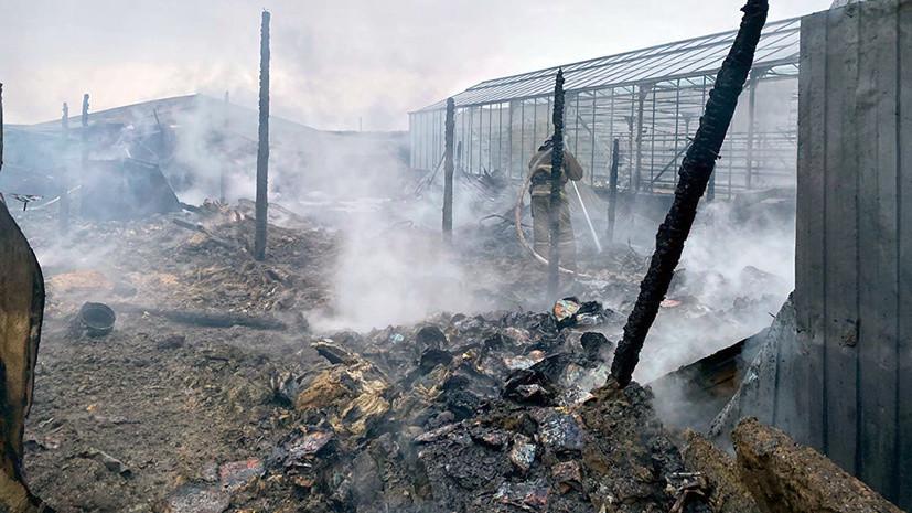 Число погибших при пожаре в Подмосковье достигло восьми