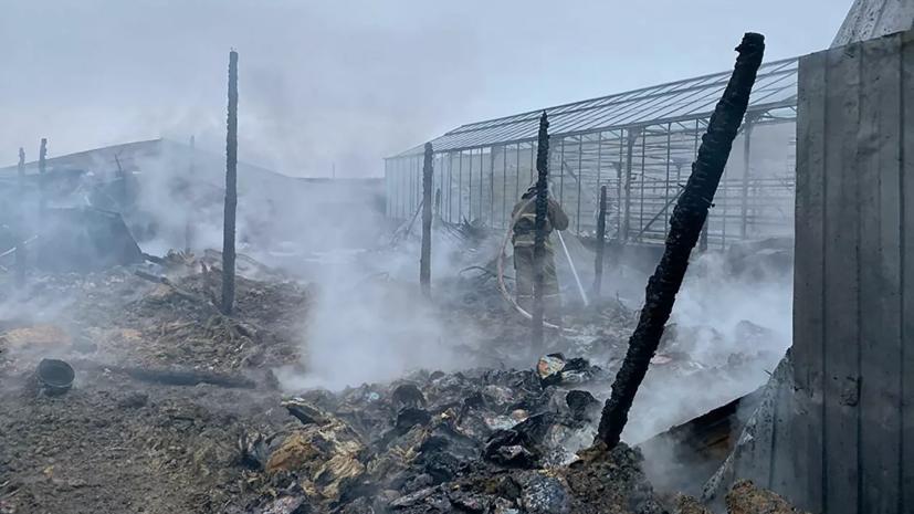 Прокуратура начала проверку из-за пожара в теплицах в Подмосковье