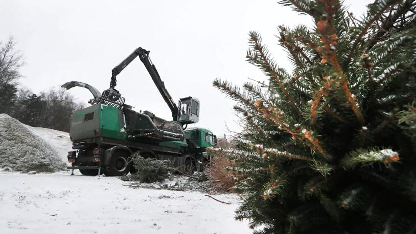 Пункты приёма новогодних ёлок откроются 10 января в Казани