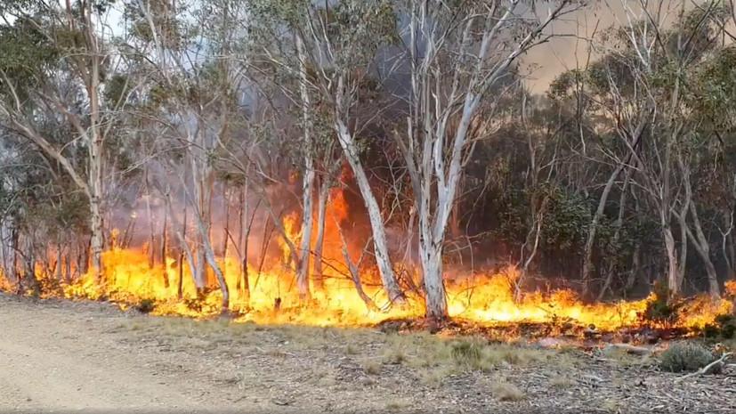 Число погибших из-за пожаров в Австралии достигло 27