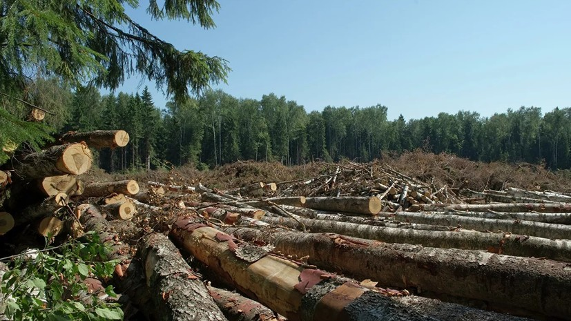 Счётная палата выявила проблемы в экспорте сырого леса из России