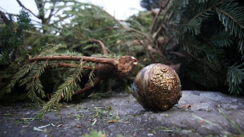 Места для сдачи новогодних ёлок откроются 26 января в Симферополе