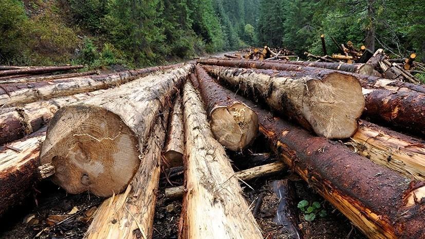 Иркутский бизнесмен задержан по подозрению в контрабанде леса