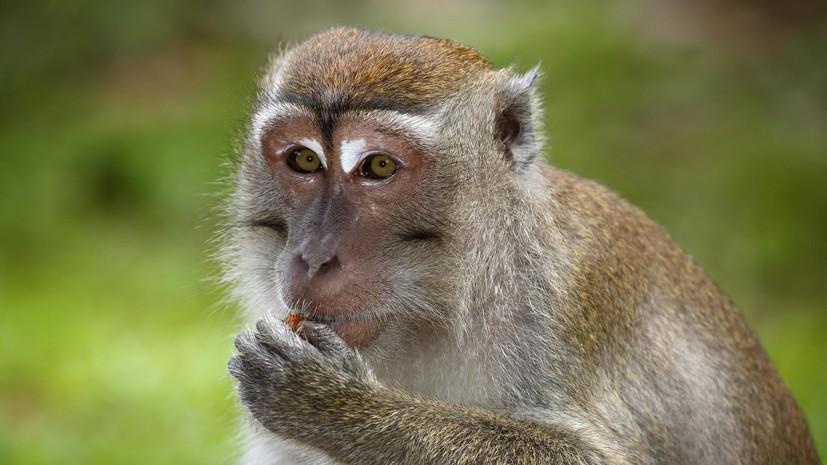 В Калуге заявили о краже десяти обезьян из центра реабилитации диких животных