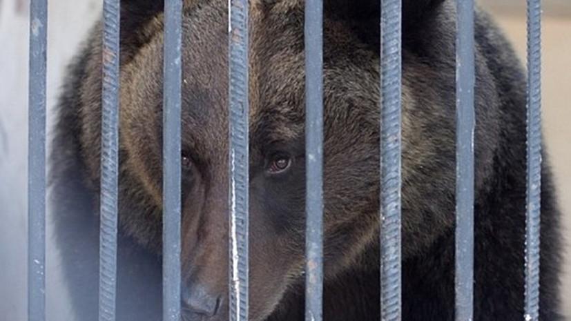 В казанском зоопарке из-за тепла проснулись медведи