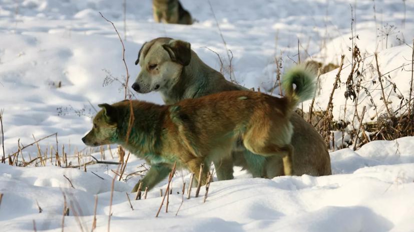 В Тюменской области ввели карантин по бешенству животных