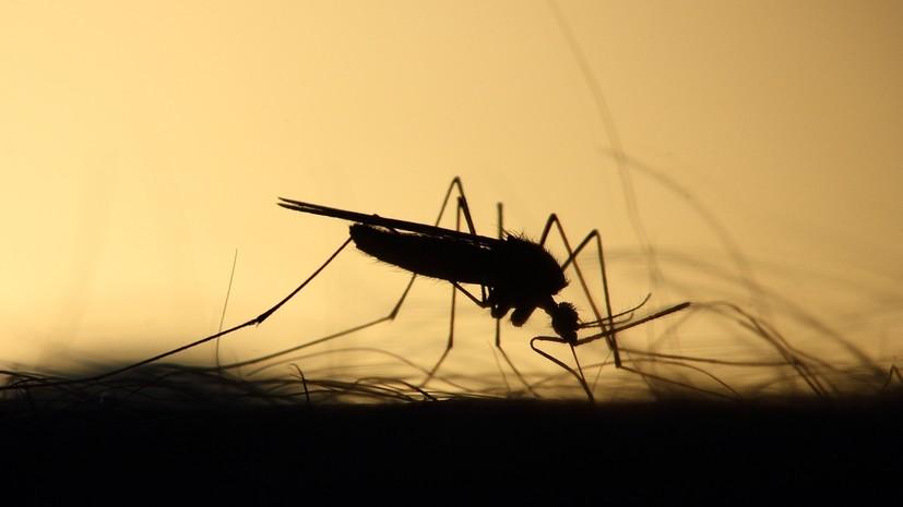 Эксперты предупредили о возможности исчезновения комаров из-за тёплой зимы