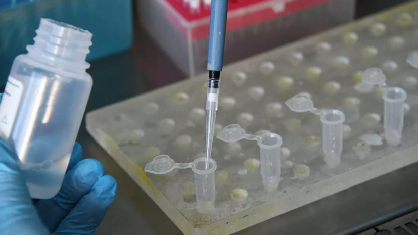 В Латинской Америке подтверждён первый случай коронавируса