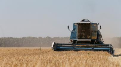 Производство сельхозпродукции в Ростовской области выросло на 5,4% в 2019 году