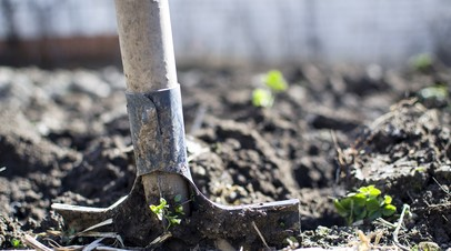 Акция «День посадки леса» пройдёт в Татарстане 25 апреля