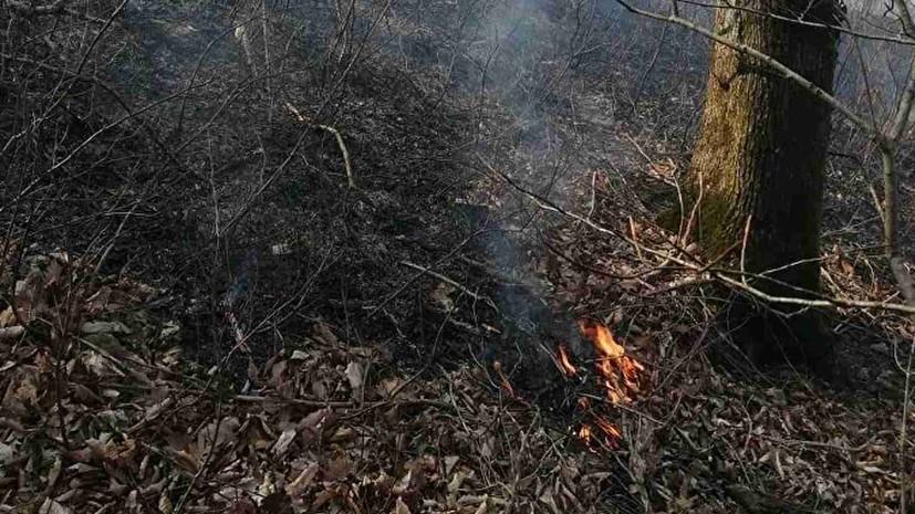 В Севастополе вводят пожароопасный сезон с 23 марта