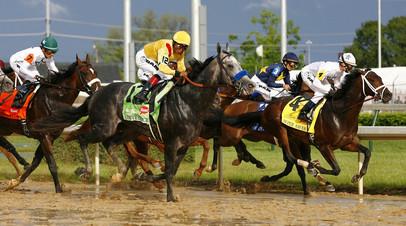 «За алчность обвиняемых расплатились скаковые лошади»: в США раскрыта схема применения допинга в конном спорте