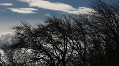 Штормовой ветер повалил в Подмосковье более 60 деревьев