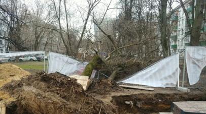 Сильный ветер в Москве повалил более 200 деревьев