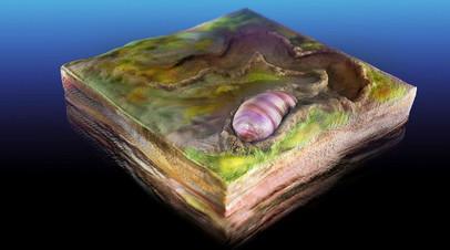 Древнейшая билатерия была обнаружена в Южной Австралии, её возраст составляет около 555 млн лет