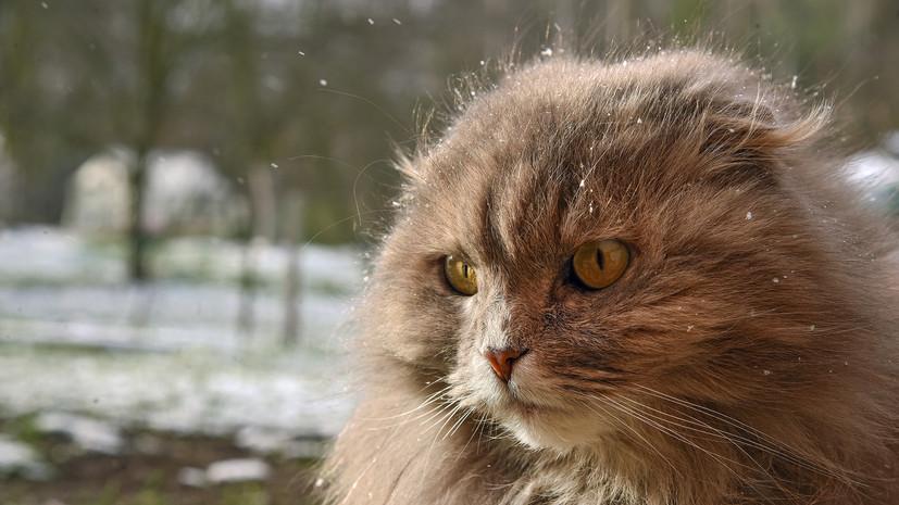Ветеринары рассказали о коронавирусе у кошек в Ухани