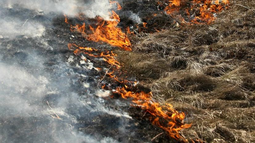 Рослесхоз предложил ввести особый противопожарный режим в Забайкалье