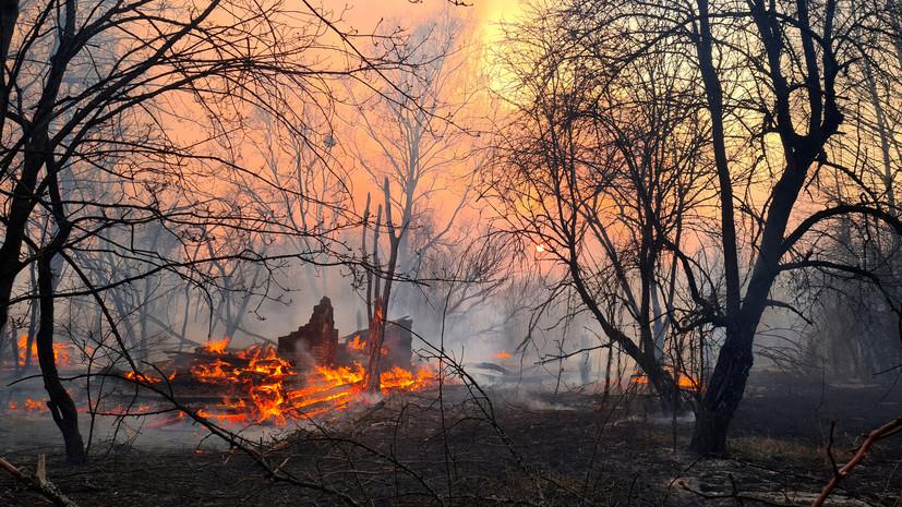 Метеорологи оценили риски пожаров в чернобыльской зоне для России
