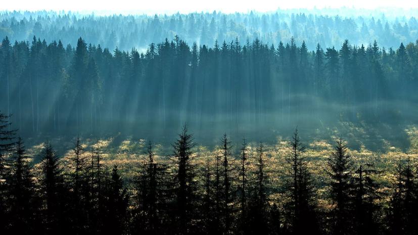 Россияне назвали главные признаки хорошей экологии