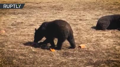Жители Приморья спасают медведей из местного приюта от голода
