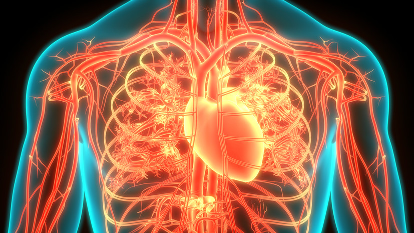 Окно возможности: российские учёные выяснили оптимальный для восстановления сердца возраст стволовых клеток