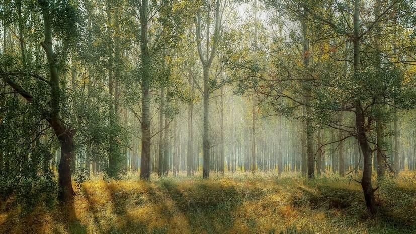 В Тверской области продлили ограничение на посещение лесов до 1 июня