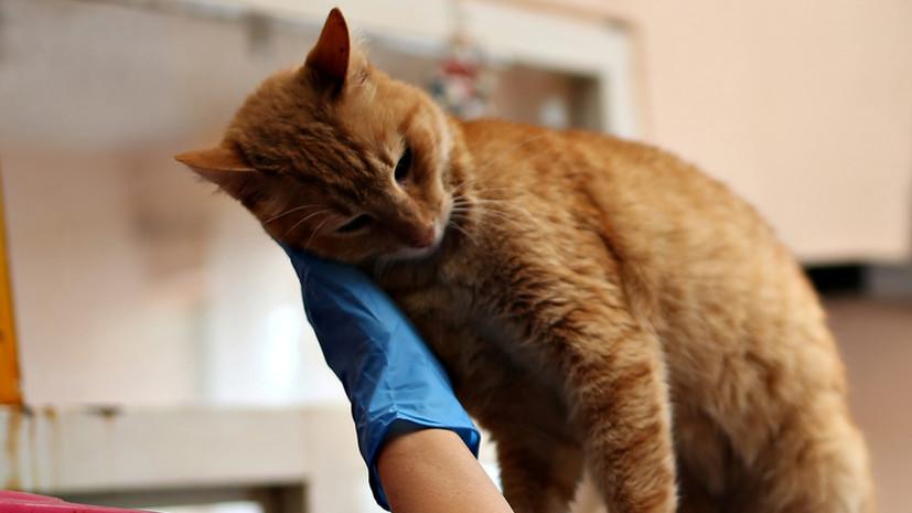 В России у кошки анализ на коронавирус дал положительный результат