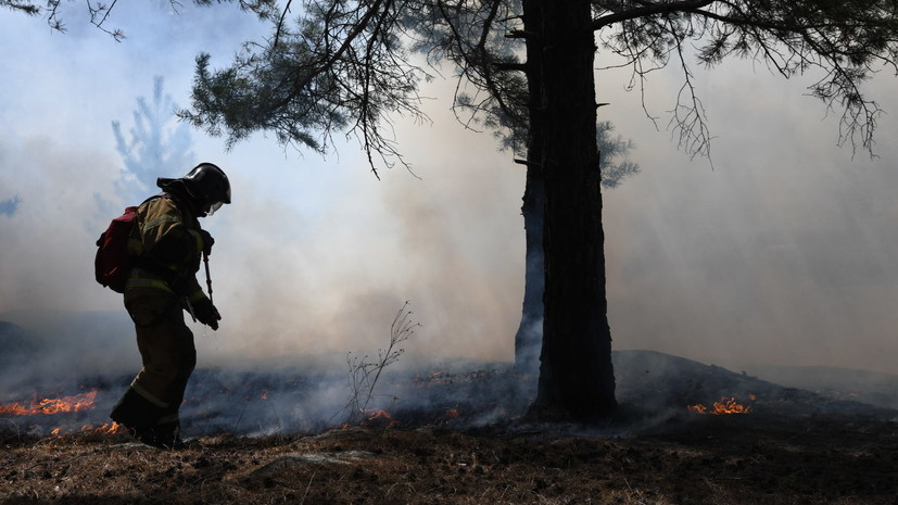 В России за сутки ликвидировано 57 лесных пожаров
