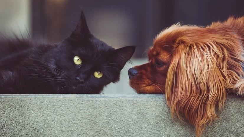 Инфекционист оценил вероятность заболеть COVID-19 из-за домашних животных