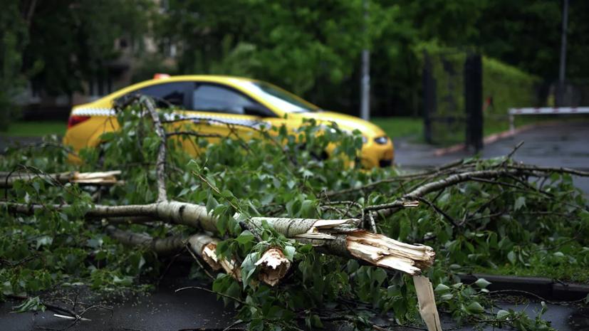 В Москве ветер повалил более 60 деревьев
