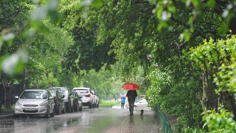 Источник: сильный ветер в Москве в выходные повалил более 340 деревьев
