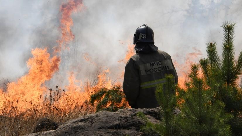 В России за сутки ликвидировано 29 лесных пожаров