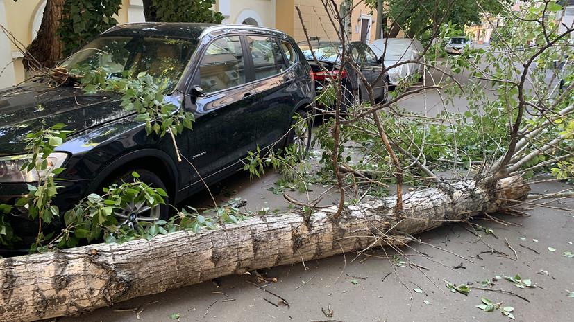 Сильный ветер в Москве повалил 44 дерева и повредил 25 машин